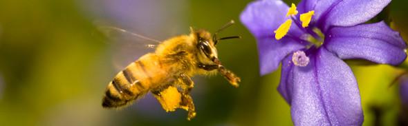 5: Bijenproducten