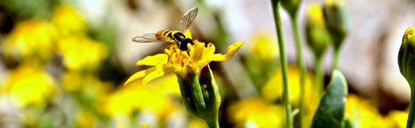 Bijen Producten